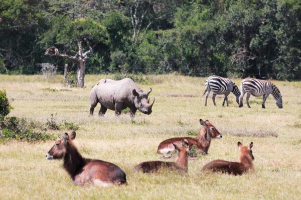Efter at Uldum Højskoles tur til Kenya er slut, tager eleverne ofte videre til nye oplevelser - fx mere safari