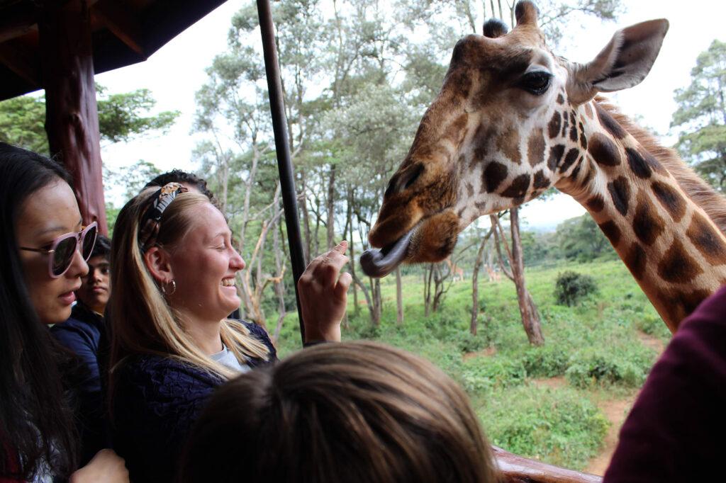 Besøge på opdrætssted for den sjældne Rothschild giraf. Uldum Højskoles tur til Kenya i Afrika.